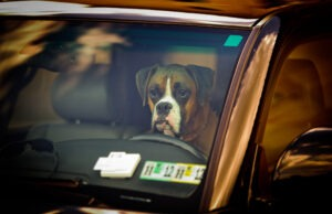 Save Pets, Heat Stress, Heat stroke, Parked Autos, Air Conditioning